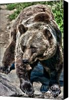 Kodiak Canvas Prints - Kodiak Bear Canvas Print by Joerg Lingnau