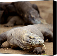 Dragon Photo Canvas Prints - Komodo Dragon Canvas Print by Susan.k.