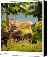 Donkey Mixed Media Canvas Prints - Kona Nightingale Canvas Print by Joseph Vittek