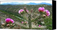 Cactus Canvas Prints - La Flor Mistica Canvas Print by Skip Hunt