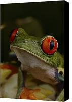 Red-eyed Frogs Canvas Prints - La Selva Station Serves As A Canvas Print by Michael Nichols