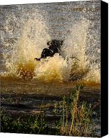 Water Retrieve Canvas Prints - Lab At Work Canvas Print by Robert Frederick