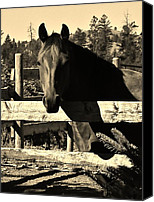 St Barbara Canvas Prints - LaBounty Quarter Horse Canvas Print by Barbara St Jean
