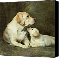Looking Canvas Prints - Labrador Dog Breed With Her Puppy Canvas Print by Sergey Ryumin