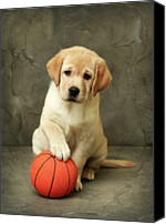 Ball Canvas Prints - Labrador Puppy With Red Ball Canvas Print by Sergey Ryumin
