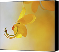 Yellow Flower Canvas Prints - Laburnum Canvas Print by Ana Encinas