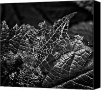Eaten Canvas Prints - Lace Work Canvas Print by Robert Ullmann