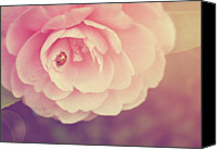 Camellia Canvas Prints - Ladybird On Camellia Canvas Print by Photo - Lyn Randle