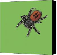 Insects Painting Canvas Prints - Ladybird Spider Canvas Print by Jude Labuszewski