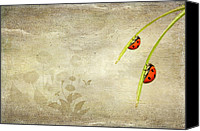 Insects Mixed Media Canvas Prints - Ladybirds Canvas Print by Svetlana Sewell