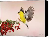 Birds In Flight Canvas Prints - Landing For A Quick Charge At The Currant Bush Canvas Print by Gerry Sibell