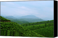 Mountain Scene Canvas Prints - Landscape Through Tea Estates Canvas Print by Photograph by Anindya Sankar Dey