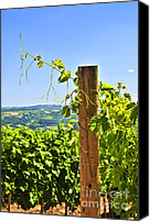 Horticultural Canvas Prints - Landscape with vineyard Canvas Print by Elena Elisseeva