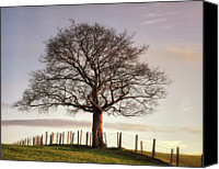 Moor Canvas Prints - Large Tree Canvas Print by Jon Baxter