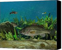 Largemouth Bass Canvas Prints - Largemouth Bass Canvas Print by Ralph Martens