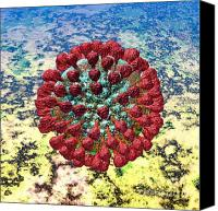 Microbiology Canvas Prints - Lassa Virus Canvas Print by Russell Kightley