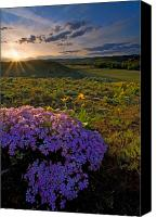 Hillside Canvas Prints - Last Light of Spring Canvas Print by Mike  Dawson