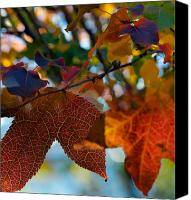 Autumn Leaves Canvas Prints - Late Autumn Colors Canvas Print by Stephen Anderson