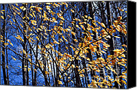 Naked Canvas Prints - Late fall Canvas Print by Elena Elisseeva