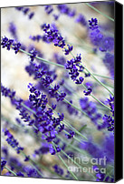 Provence Canvas Prints - Lavender Blue Canvas Print by Frank Tschakert