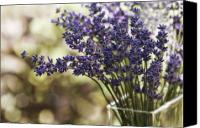 Lavender Canvas Prints - Lavender Bokeh Canvas Print by Rebecca Cozart