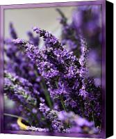 Oregon Art Canvas Prints - Lavender Canvas Print by Cathie Tyler