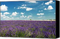 Provence Canvas Prints - Lavender Field Canvas Print by Paul Biris