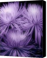 Flower Canvas Prints - Lavender Mums Canvas Print by Tom Mc Nemar