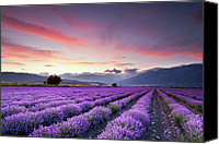 Rural Canvas Prints - Lavender Season Canvas Print by Evgeni Dinev
