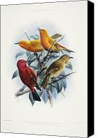 Hawaiian Vintage Art Canvas Prints - Laysan Honeycreeper Canvas Print by Reggie David - Printscapes