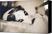 Dog Bed Photo Canvas Prints - Lazy Dog Canvas Print by Lisa MacIntosh