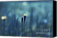 Impressionism Photo Canvas Prints - Le Centre de l Attention - BLUE s0203d Canvas Print by Variance Collections