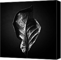 Autumn Photographs Canvas Prints - LEAF - Black and White Closeup Nature Photograph Canvas Print by Artecco Fine Art Photography - Photograph by Nadja Drieling