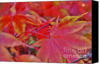 Royal Botanical Gardens Canvas Prints - Leaf 1 Canvas Print by Mark Johnstone