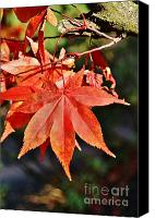 Royal Botanical Gardens Canvas Prints - Leaf 2 Canvas Print by Mark Johnstone