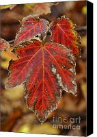 Royal Botanical Gardens Canvas Prints - Leaf 3 Canvas Print by Mark Johnstone