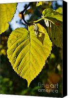 Royal Botanical Gardens Canvas Prints - Leaf 7 Canvas Print by Mark Johnstone