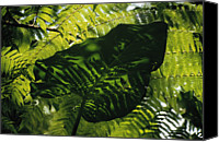 Lush Foliage Canvas Prints - Leaf Abstract Canvas Print by Philippe Colombi