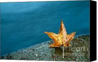 Featured Photo Canvas Prints - Leaf Canvas Print by Chris Mason