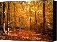Forest Floor Canvas Prints - Leaf Covered Pathway in a Golden Forest Canvas Print by Chantal PhotoPix