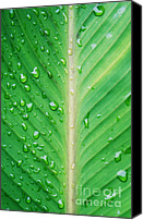 Fine Art Photo Canvas Prints - Leaf green Canvas Print by Kristin Kreet