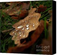 Droplets Canvas Prints - Leaf in autumn. Canvas Print by Bernard Jaubert