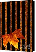 Grill Canvas Prints - Leaf in drain Canvas Print by Carlos Caetano
