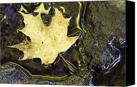 Maple Leafs Canvas Prints - Leaf In Water, Niagara Peninsula Canvas Print by Darwin Wiggett