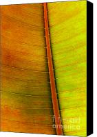 Vegetation Canvas Prints - Leaf Parttern Canvas Print by Carlos Caetano