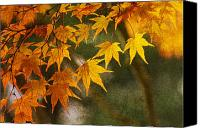 Fall Canvas Prints - Leaf Zen B Canvas Print by Rebecca Cozart