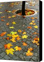 Damp Canvas Prints - Leafs in Ground Canvas Print by Carlos Caetano