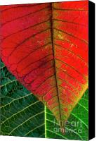 Vegetation Canvas Prints - Leafs Macro Canvas Print by Carlos Caetano