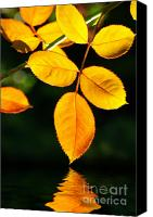 Lush Canvas Prints - Leafs over water Canvas Print by Carlos Caetano
