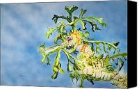Creature Painting Canvas Prints - Leafy Sea Dragon Canvas Print by Tanya L Haynes - Printscapes